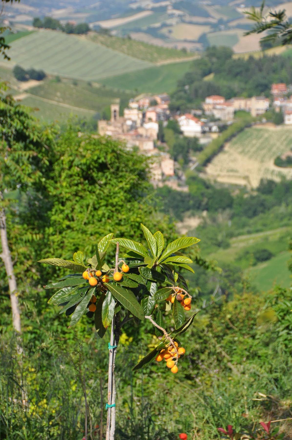 Uitzicht op Porchia